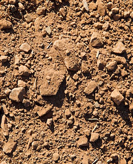 Wurtele vineyard soil for Rocks and soil information